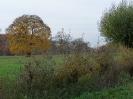 Leineaue im Herbst 2012_2