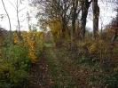 Leineaue im Herbst 2012_3