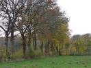 Leineaue im Herbst 2012_4