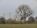 Leineaue im Herbst 2012_5