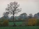 Leineaue im Herbst 2012_6