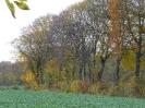 Leineaue im Herbst 2012