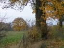 Leineaue im Herbst 2012_8