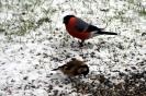 Tiere im Winter_1